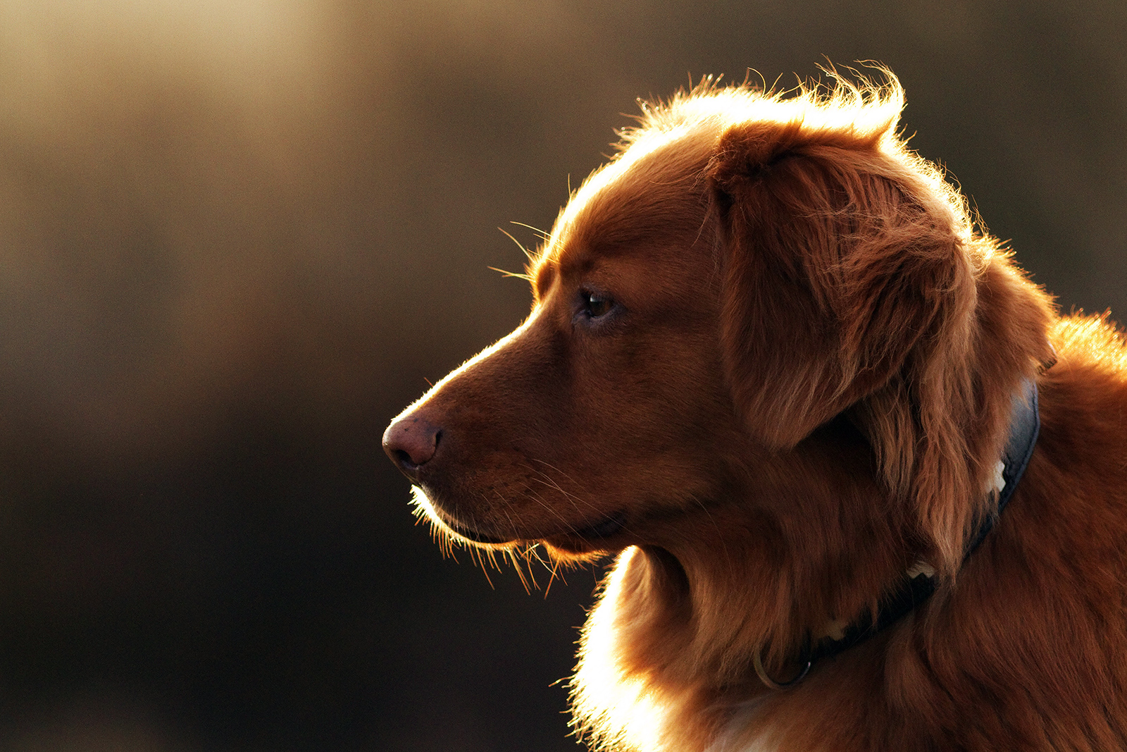dog sitting in the sunshine