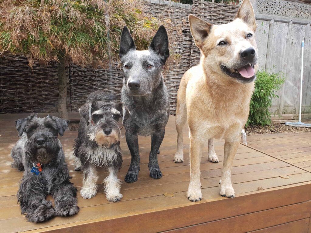 Dogz Business
