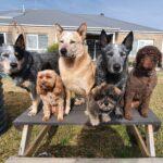 Dog training geelong