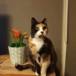 Pet sitting for cats